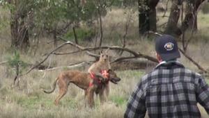 Det, som denne mand gjorde, for at redde en hund, er virkelig usædvanligt ...