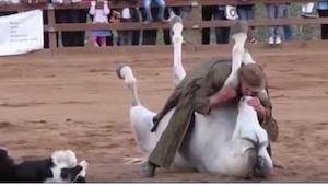 Træneren gav hesten et kys. Det, som skete efterfølgende, fik os til at tabe mæl
