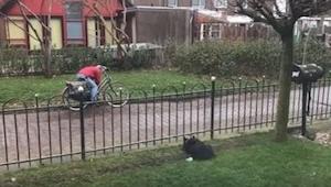 Hunden kedede sig alene i haven ... Så den udtænkte en genial måde at lege på! S