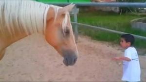 Den lille dreng kom farligt tæt på hestens ben. Den optagelse – lavet af hans mo