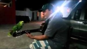 Denne optagelse af en syngende papegøje skaber furore på internettet. Den skal s