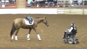 Hesten skridter hen til en kvinde i kørestol – et øjeblik senere er tilskuerne v