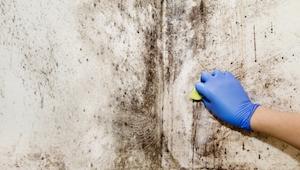 Giftig skimmelsvamp (aspergillus niger) – de fem hyppigste tegn på, at du har de