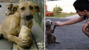 Barnet fodrede en herreløs hund. Da han så det, var der en forarget forbipassere