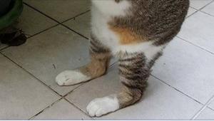 Hun troede, hun havde fundet en typisk hjemløs kat, men da hun løftede den op fr