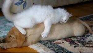 20 katte som syntes at hunde er de bedste puder. Nummer 18 er smaddersød!