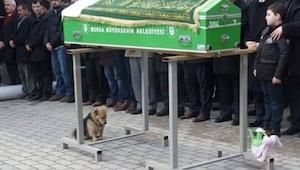 Hunden sidder ved siden af kisten med et sørgeligt udtryk I øjnene.. Ingen regne