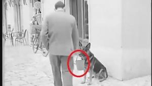 Han undrede sig, da han så hunden med en lille spand i flaben, men et øjeblik se