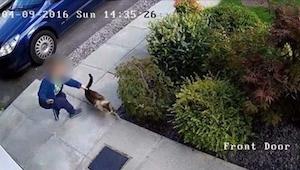 Kameraet optog, hvordan naboens søn pinte deres kat – heldigvis kommer nemesis t