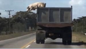 Det som chaufføren så foran sin bil giver ikke mening I mit hoved! Det skete vir