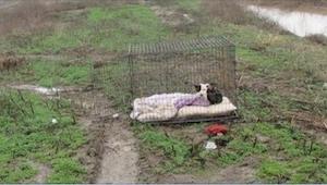 Hunden var låst inde i et bur, rystende fra kulden, hvor den ventede på sine eje