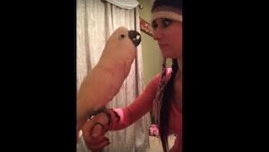 Denne papegøje som beklager sig til sin ejer, er den sjoveste video du vil se i