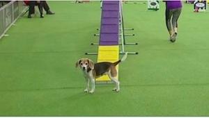 Hunden begynder sin optræden, og allerede efter få sekunder er alle tilskuerne f