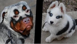 11 unikke hunde... Se dem lige!