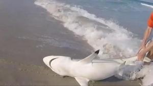 Manden trækker en rasende haj op af vandet, hvad der så sker er fantastisk!