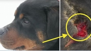 Hundens ejer var rystet over, at hun var blevet bidt af sin egen hund. Først et