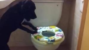 Ejeren lavede en hemmelig optagelse af sin hund, efter at den var begyndt at for