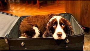 Han gemte hunden nede i sin kuffert. Da vi fandt ud af hvad det gik ud, kunne vi