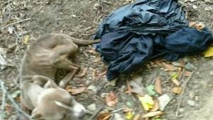 Kvinden fandt en hund i skraldespanden, og da man opdagede hvem ejeren var choke