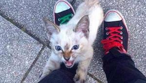 Denne vilde kat kom hen til en mand og ville ikke lade ham være i fred - vi har