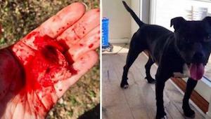 Da kvinden blev klar over, hvad hendes hund næsten havde spist, ringede hun omgå