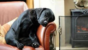 Han adopterede en hund, og fik sammen med ham et brev fra den tidligere ejer - i