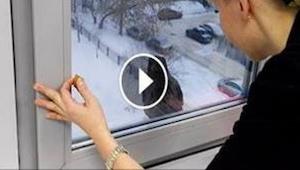 Det som fuglen gør, efter at hun åbnede vinduet for den, er direkte komisk!