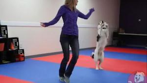 Du vil ikke tro dine egne øjne når du ser denne collie danse med sin ejer. Stort