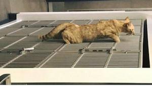 Denne kat sniger sig ind på en sovende hund. Det den så gør får alle til at tabe