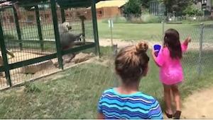 Påtrængende piger i zoologisk have mod en rasende bavian ... Det kunne ikke afs