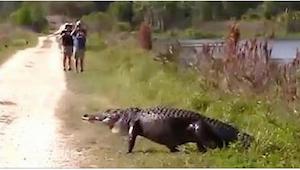 Parret optog en alligator som gik ud foran dem. Det var først da de så optagelse