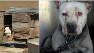 Det var meningen at denne hund skulle være lænket i 2 år, imens ejeren sad i fæn