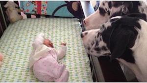 Hvad sker der når man efterlader sin baby sammen med hunden? Se selv efter!