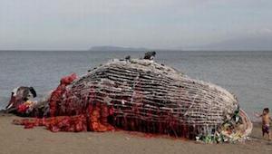 De fandt en død strandet hval. Da de så hvad der skjulte sig i dens indre fik de