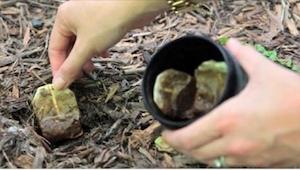 Det er værd altid at have en brugt tepose ved hånden som man kan grave ned. Se h