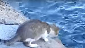 Jeg troede, at den kat var ved at springe i vandet. Det, den foretog sig, gjorde