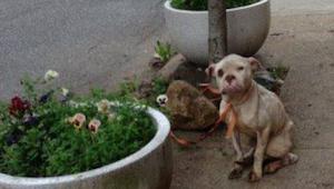Postbuddet bemærkede en udhungret hund, som var bundet til et træ – så beslutted