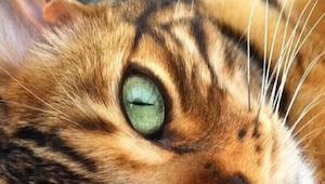 Da den var lille, troede de, at det var en tiger, men efter nogle måneder viste