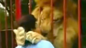 Løven kaster sig op på kvinden, men hun er ikke bange! Se hvorfor!