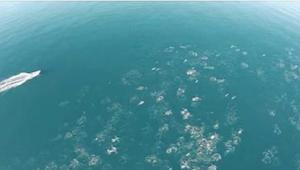 Manden filmer havet fra en drone. Hvad han formår at fange er utroligt!
