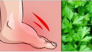 Ønsker du at slippe af med hævede ben? Gå ud i haven efter en plante.