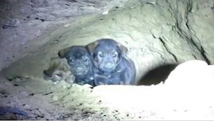 Manden fandt 8 hvalpe i en underjordisk hule - et øjeblik efter opdagede han nog