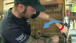 Denne lille hund tilbragte hele sit liv i et bur; sulten, snavset og syg. Da den