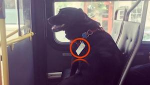 Buspassagererne vidste ikke, hvordan de skulle forholde sig til synet af en hund