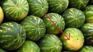 Hvad skal man huske på, med henblik på at udvælge en moden og sød vandmelon.