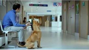 Hunden og hans ejer  venter tålmodigt ved døren til fødestuen. Det vil overraske