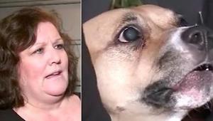 Den nyadopterede hund blev ved med at gø mod døren – et øjeblik senere opdagede