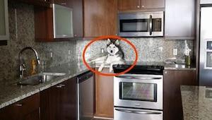 Ejeren så sin hund gøre noget underligt. Da det gik op for ham, kunne han ikke s