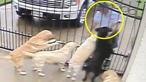 Det skjulte kamera ser, hvad postbudet gør ved hundene på sin rute. Denne video