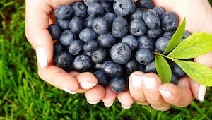5 grunde til at blåbær kan gå hen og blive din yndlingsfrugt.